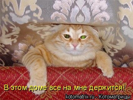 Котоматрица: В этом доме все на мне держится!..