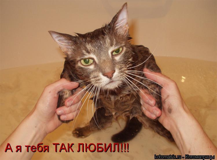 Котоматрица: А я тебя ТАК ЛЮБИЛ!!!