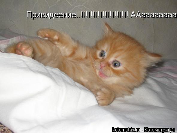 Котоматрица: Привидеение..!!!!!!!!!!!!!!!!!!!! ААаааааааааааааа!