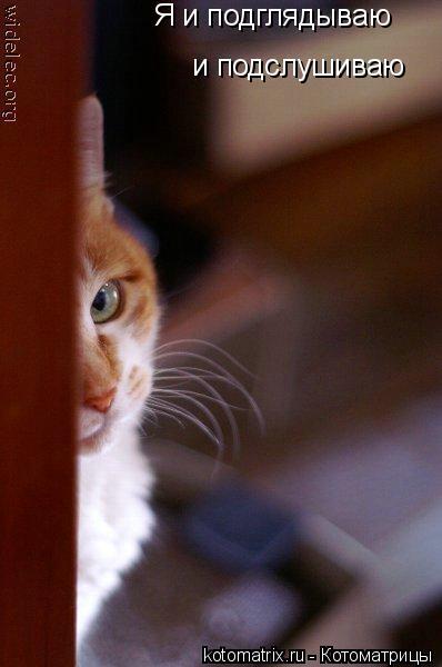 Котоматрица: Я и подглядываю и подслушиваю