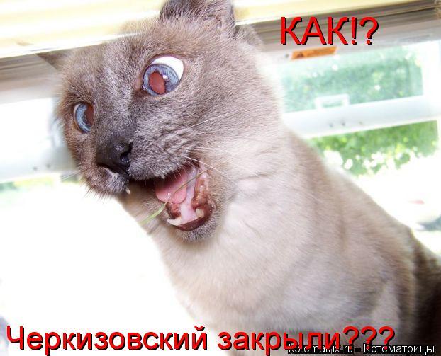 Котоматрица: КАК!? Черкизовский закрыли???