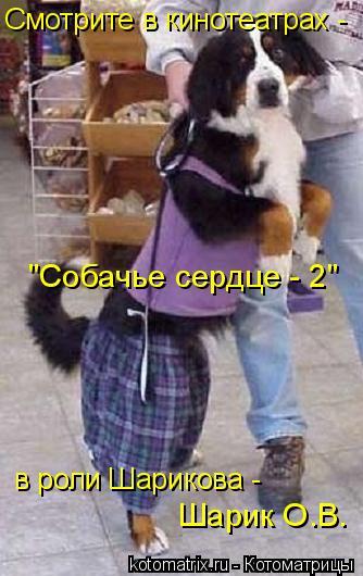 """Котоматрица: Смотрите в кинотеатрах - """"Собачье сердце - 2"""" Шарик О.В. в роли Шарикова -"""