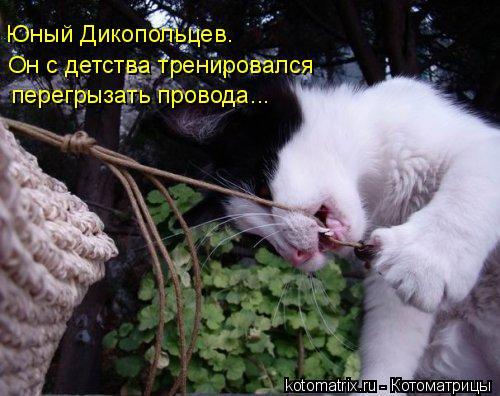 Котоматрица: Юный Дикопольцев.  Он с детства тренировался перегрызать провода...