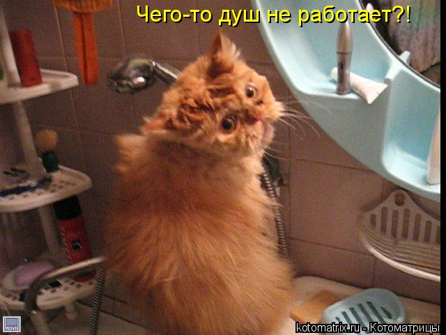 Котоматрица: Чего-то душ не работает?!