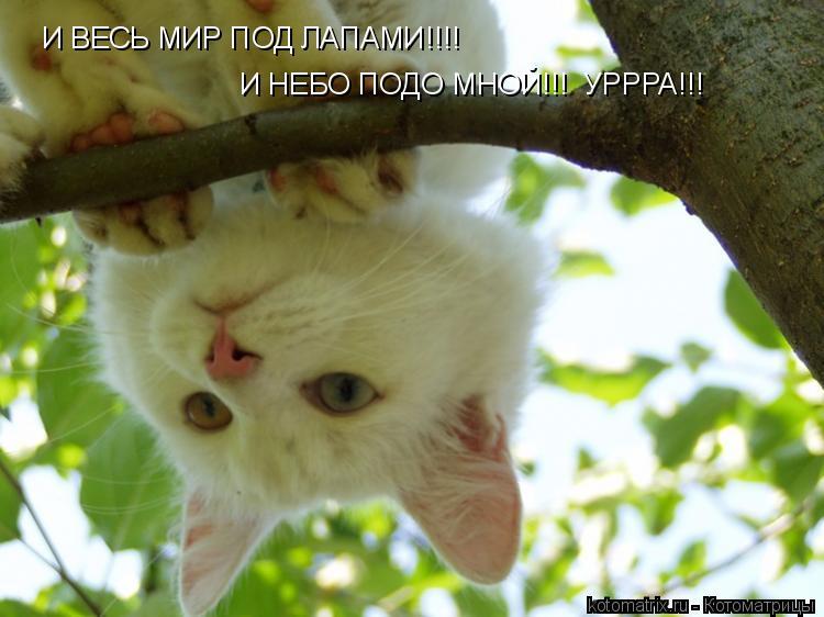 Котоматрица: И ВЕСЬ МИР ПОД ЛАПАМИ!!!! И НЕБО ПОДО МНОЙ!!!  УРРРА!!!