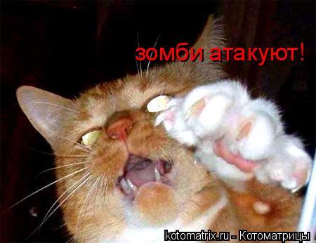 Котоматрица: зомби атакуют!