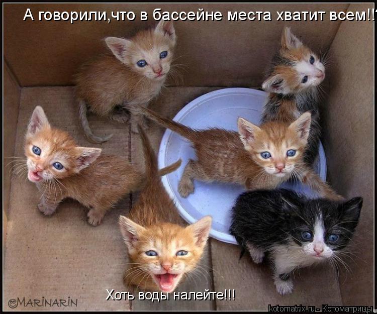 Котоматрица: А говорили,что в бассейне места хватит всем!!??? Хоть воды налейте!!!