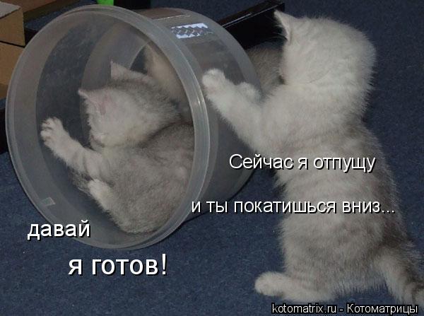 Котоматрица: Сейчас я отпущу и ты покатишься вниз... давай я готов!