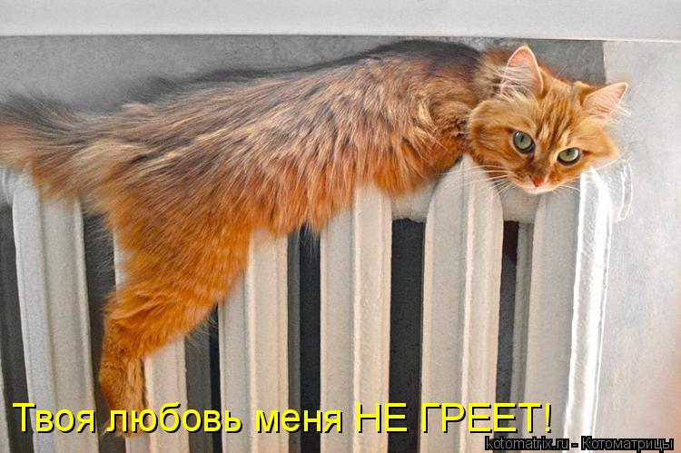 Котоматрица: Твоя любовь меня НЕ ГРЕЕТ!