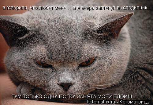 Котоматрица: а говорили, что любят меня...  а я вчера заглянул в холодилник... ТАМ ТОЛЬКО ОДНА ПОЛКА ЗАНЯТА МОЕЙ ЕДОЙ!!!.