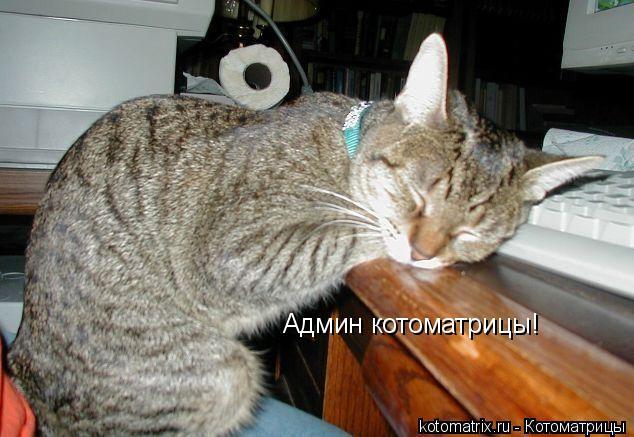 Котоматрица: Админ котоматрицы!