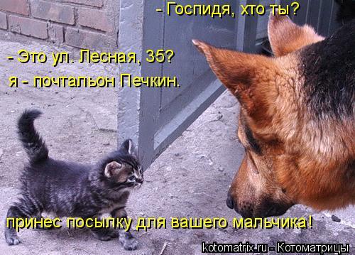 Котоматрица: - Госпидя, хто ты? - Это ул. Лесная, 35?  я - почтальон Печкин. принес посылку для вашего мальчика!