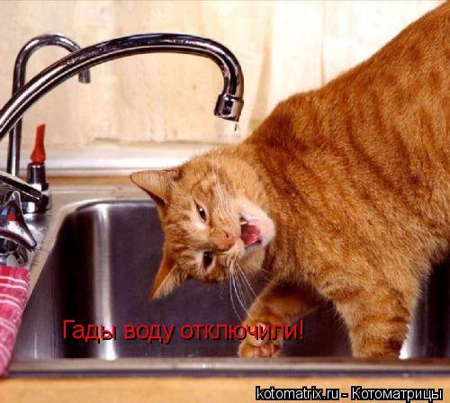 Котоматрица: Гады воду отключили!
