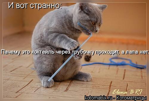 Котоматрица: И вот странно: Пачему это коктейль через трубочку проходит, а лапа нет....