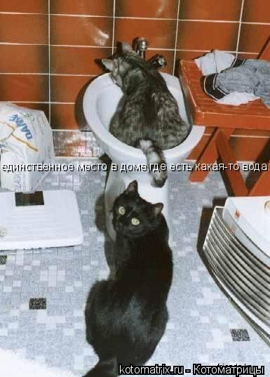 Котоматрица: единственное место в доме,где есть какая-то вода...