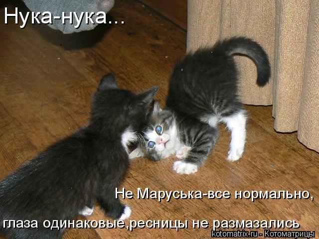 Котоматрица: Нука-нука... Не Маруська-все нормально, глаза одинаковые,ресницы не размазались