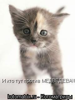 Котоматрица: И кто тут против МЕДВЕДЕВА!!!