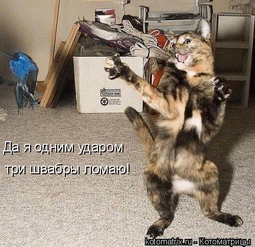 Котоматрица: Да я одним ударом три швабры ломаю!