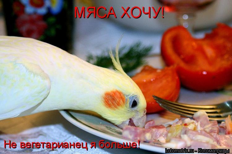 Котоматрица: Не вегетарианец я больше! МЯСА ХОЧУ!