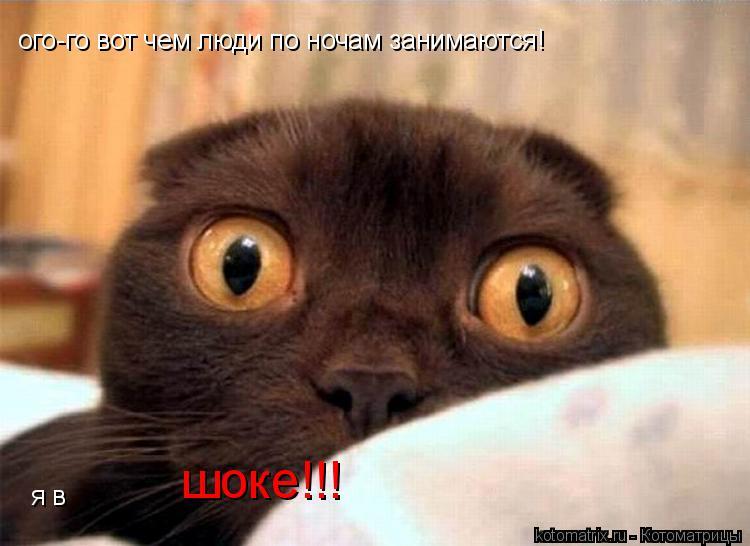 Котоматрица: ого-го вот чем люди по ночам занимаются! я в  шоке!!!