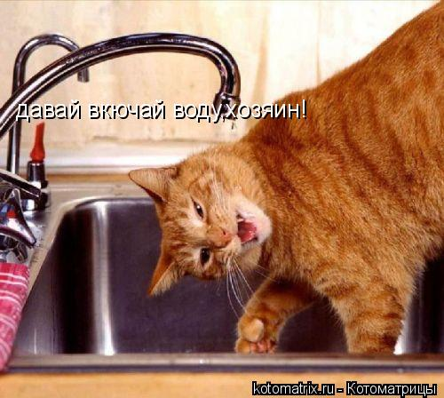 Котоматрица: давай вкючай воду,хозяин!