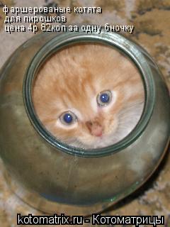 Котоматрица: фаршерованые котята для пирошков цена 4р 82коп за одну бночку