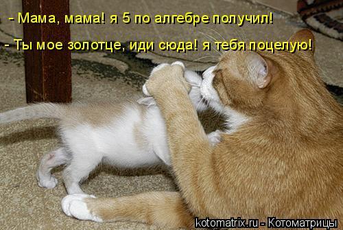 Котоматрица: - Мама, мама! я 5 по алгебре получил! - Ты мое золотце, иди сюда! я тебя поцелую!