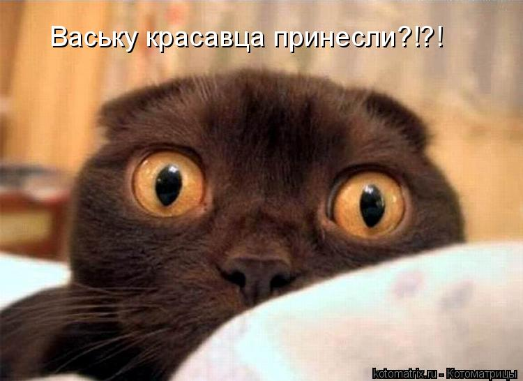 Котоматрица: Ваську красавца принесли?!?!