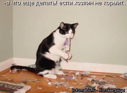 Котоматрица: -а что еще делать! если хозяин не кормит...
