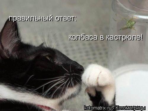 Котоматрица: правильный ответ:  колбаса в кастрюле!