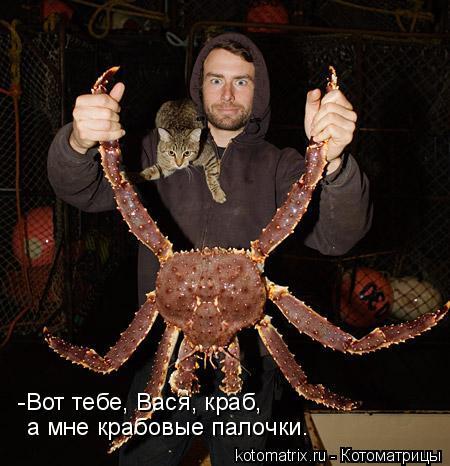 Котоматрица: -Вот тебе, Вася, краб, а мне крабовые палочки.