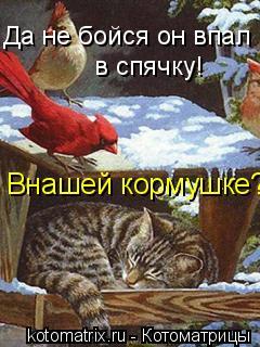 Котоматрица: Да не бойся он впал в спячку!  в спячку! Внашей кормушке???