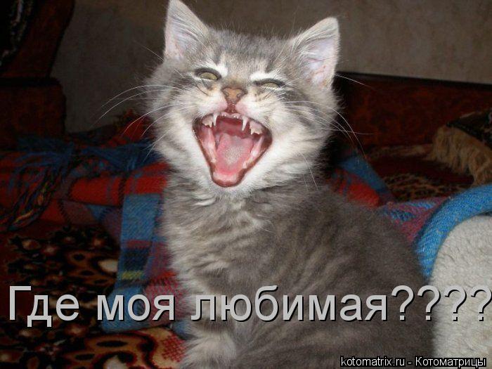 Котоматрица: Где моя любимая?????