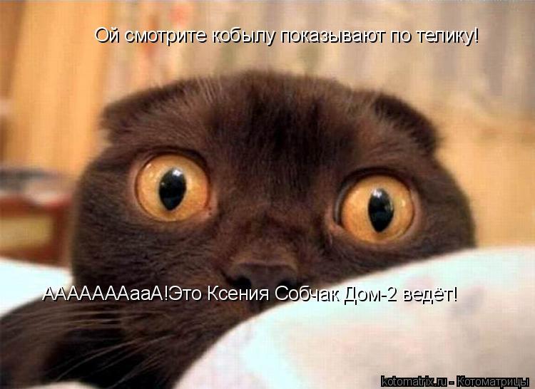Котоматрица: Ой смотрите кобылу показывают по телику! АААААААааА!Это Ксения Собчак Дом-2 ведёт!