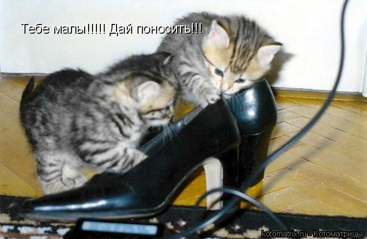 Котоматрица: Тебе малы!!!!! Дай поносить!!!