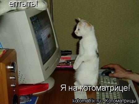 Котоматрица: ептыть! Я на котоматрице!