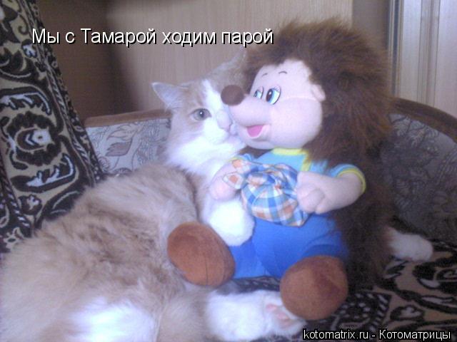 Котоматрица: Мы с Тамарой ходим парой