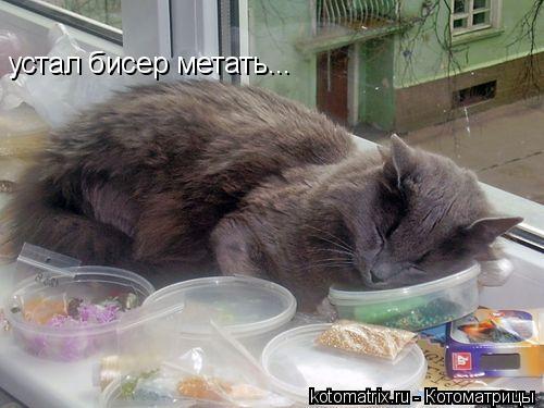 Котоматрица: устал бисер метать...