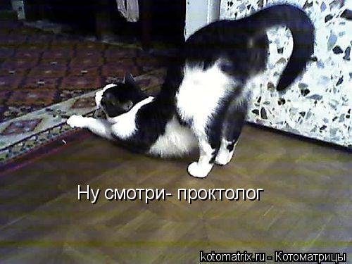 Котоматрица: Ну смотри- проктолог