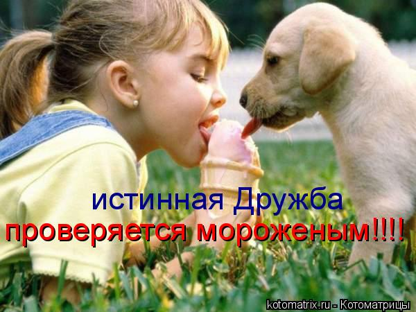 Котоматрица: истинная Дружба  проверяется мороженым!!!!