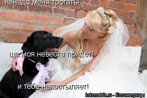 Котоматрица: ненадо меня трогать! ща моя невеста придёт! и тебе накостыляет!