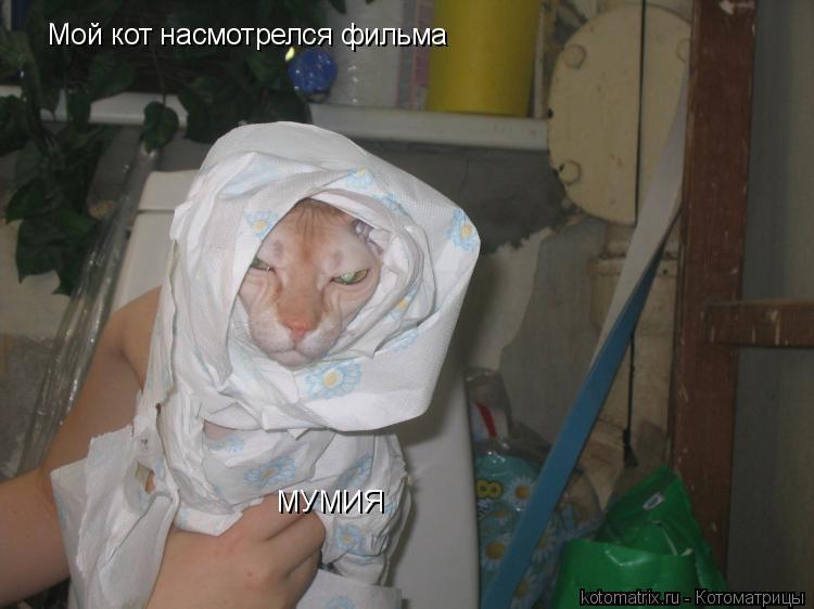 Котоматрица: Мой кот насмотрелся фильма МУМИЯ