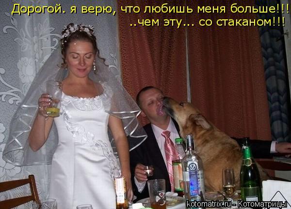 Котоматрица: Дорогой. я верю, что любишь меня больше!!! ..чем эту... со стаканом!!!