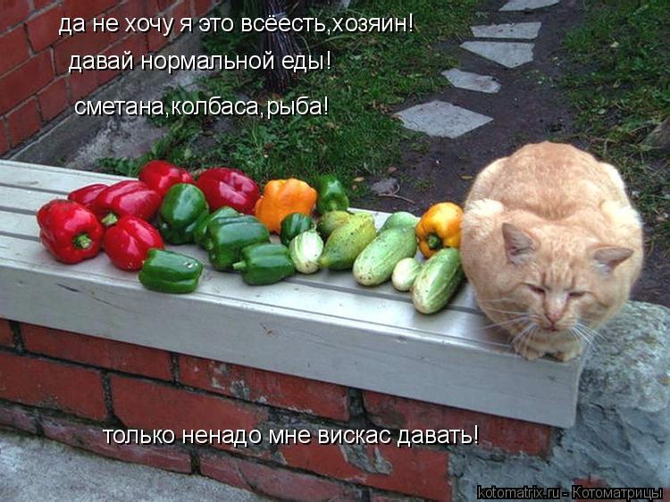 Котоматрица: да не хочу я это всёесть,хозяин! давай нормальной еды! сметана,колбаса,рыба! только ненадо мне вискас давать!