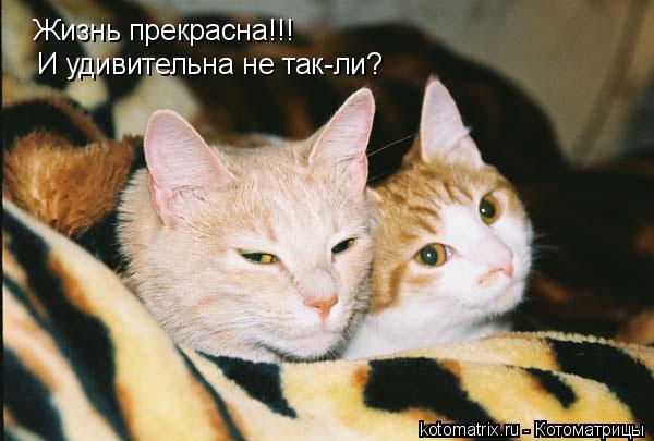 Котоматрица: Жизнь прекрасна!!! И удивительна не так-ли?