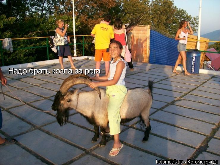 Котоматрица: Надо брать козла за рога