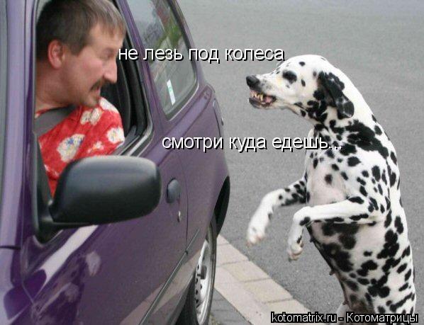 Котоматрица: смотри куда едешь... не лезь под колеса