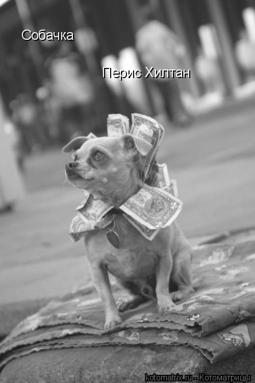 Котоматрица: Собачка Перис Хилтан