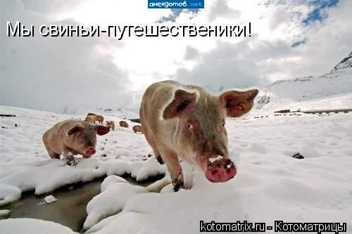 Котоматрица: Мы свиньи-путешественики!
