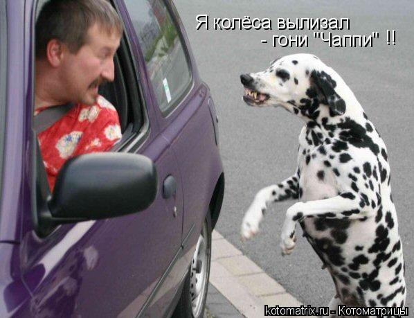 """Котоматрица: Я колёса вылизал - гони """"Чаппи""""  !!"""
